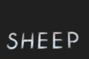 Neon Sign Sheep